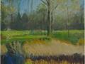 haarlemmermeerse-bos-2012-50-x-50-cm